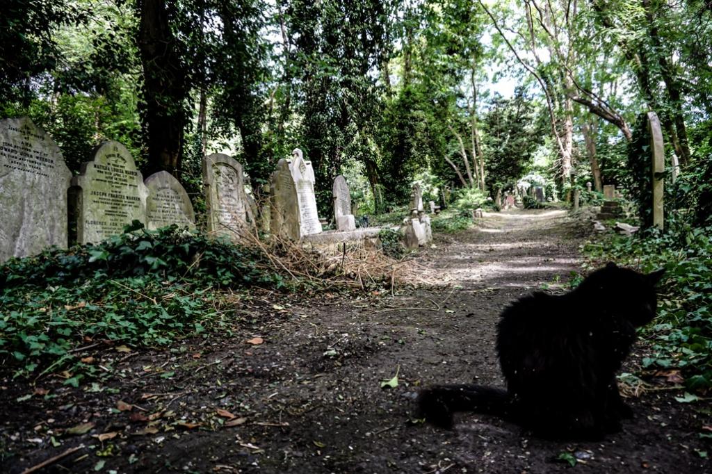 Black cat in the Highgate Cemetery.