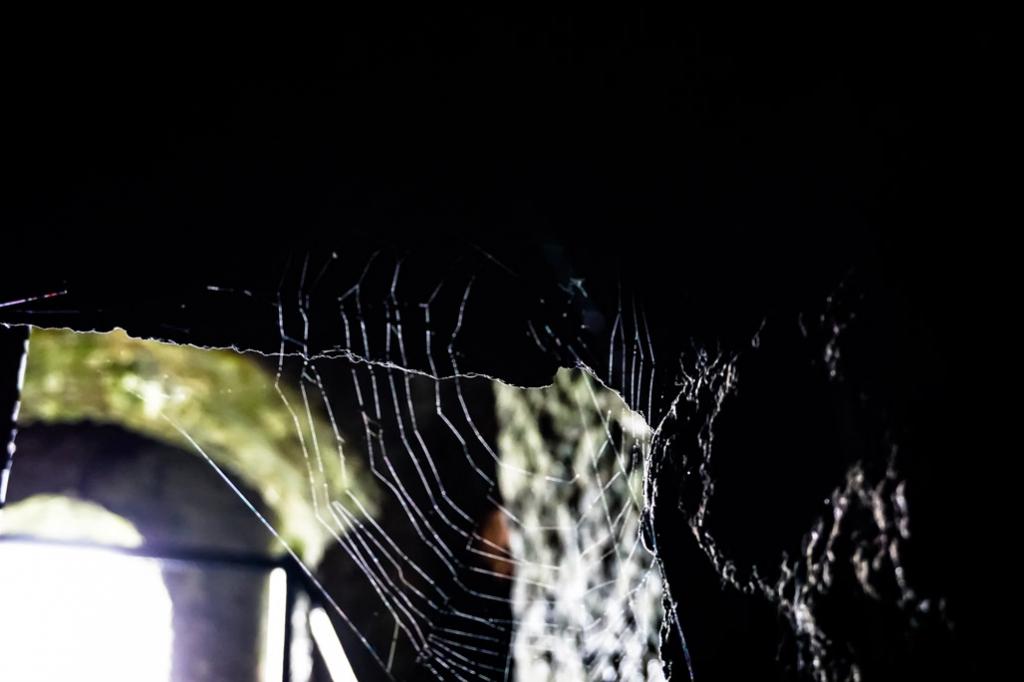 Spiderweb in the Dublin Hellfire Club.