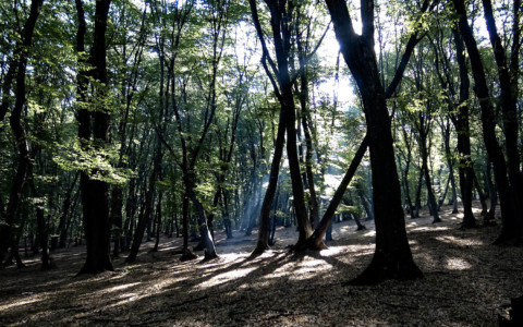 Hoia Baciu Forest: World's Most Haunted Forest