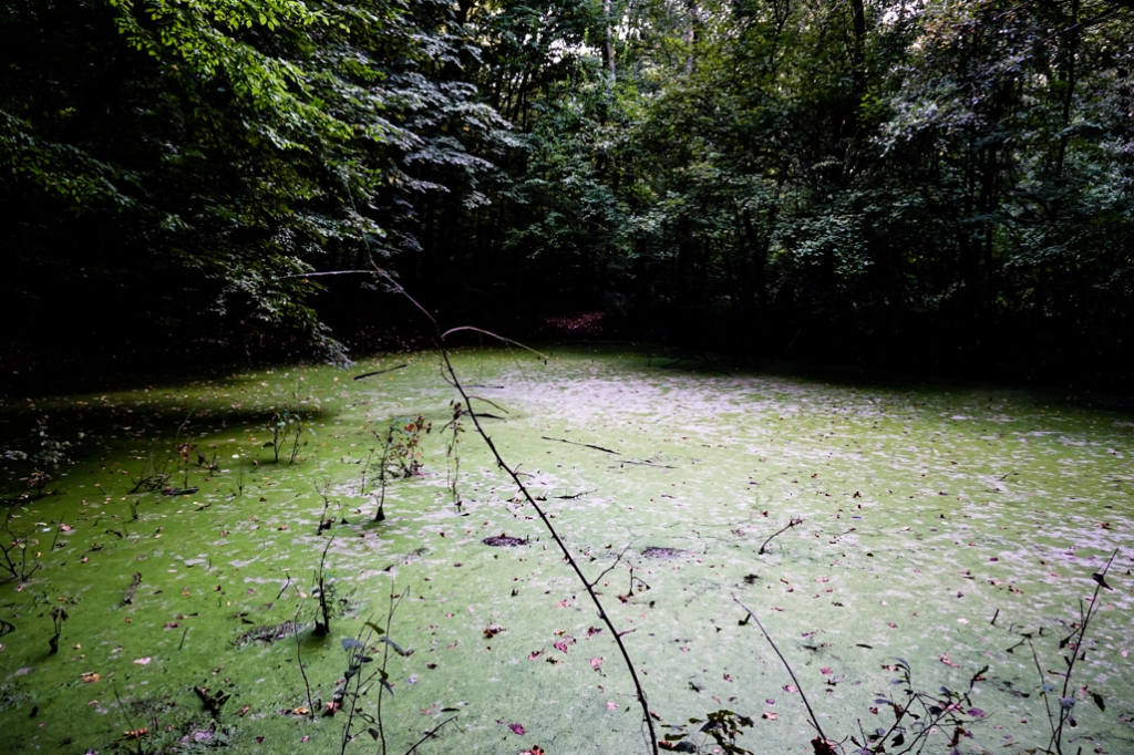 A thick layer of algae covers the Witches Pond in Romania.