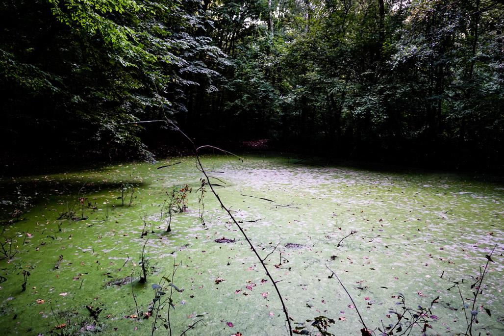 Witches Pond near Bucharest Romania.