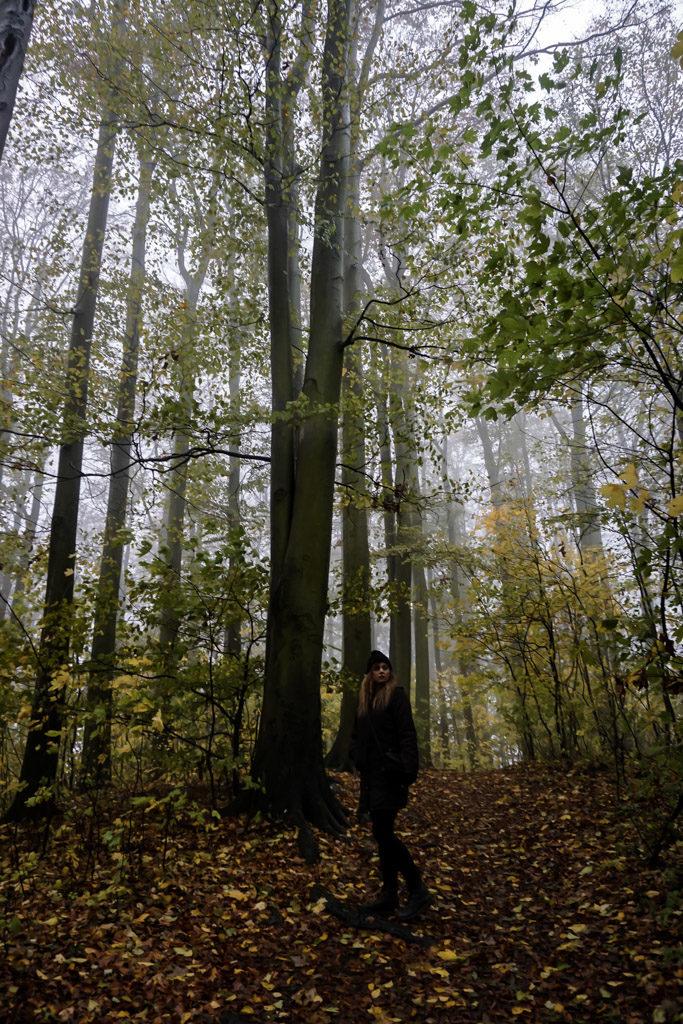 Forest around Houska Castle.