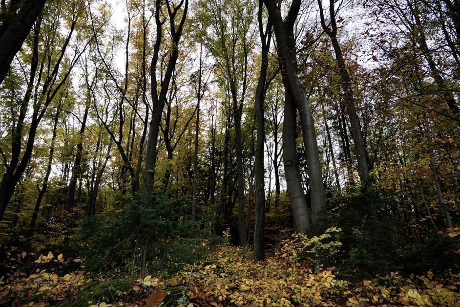 Burg Wolfsegg haunted forest.