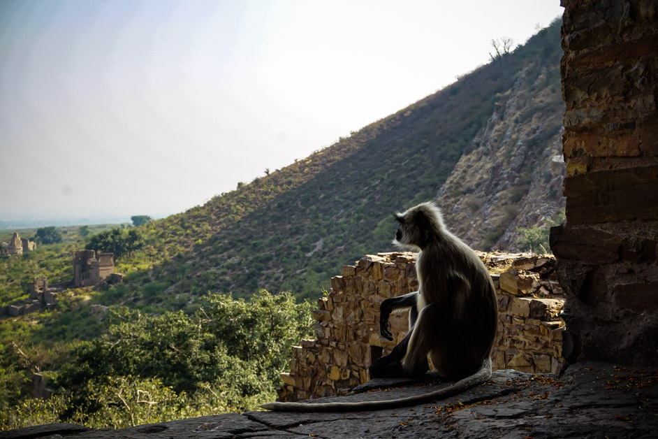Monkey in haunted place of India.