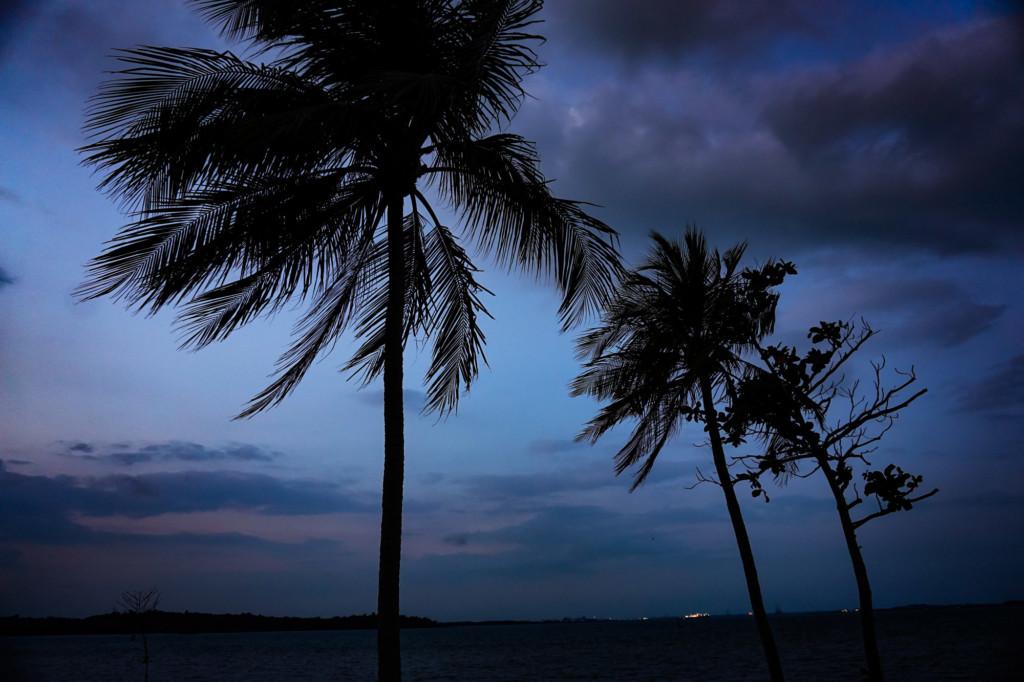 Palm trees on Changi Beach, Singapore.