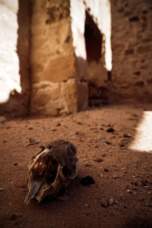 Kangaroo skull at Australian ghost town.