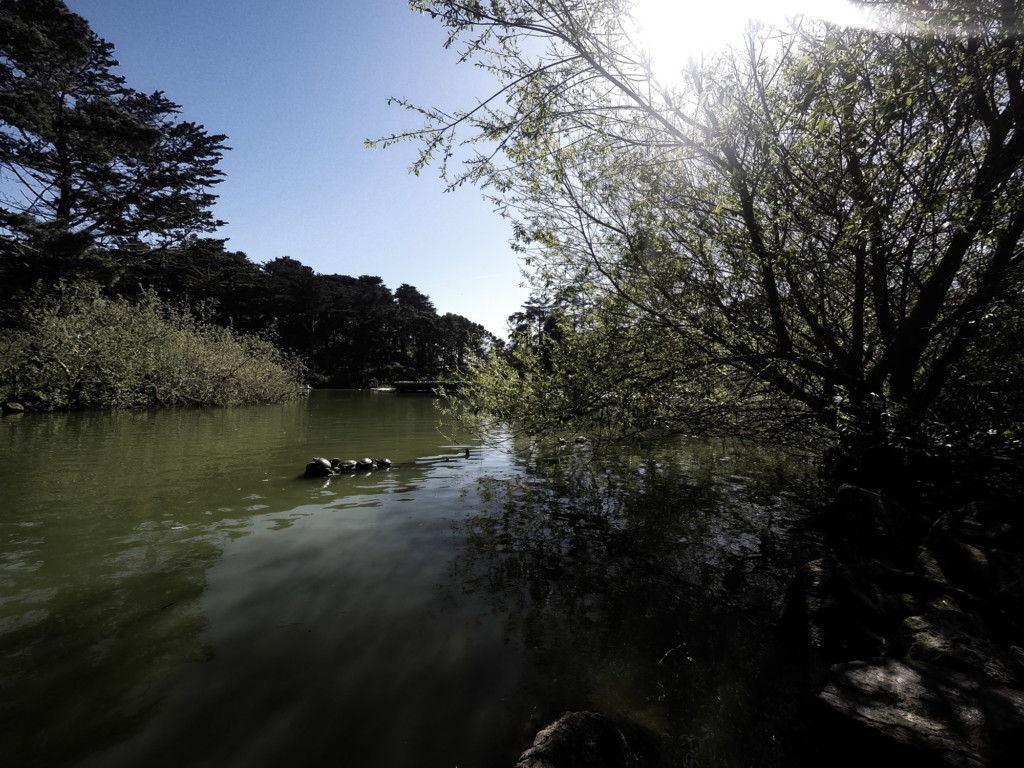 Haunted Stow Lake in Golden Gate Park, California.