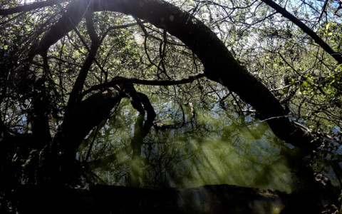 Stow Lake Ghost: Haunted San Francisco